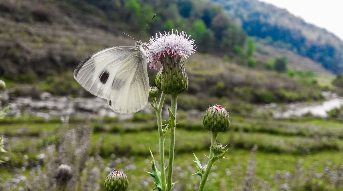 #butterfly #flower #garden #bhupenbbb #bhupendraphotographybbb #viral #story #nature #insect #wildlife #beauty