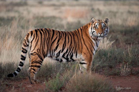 #ranthamboresafaribooking #ranthamborenationalpark #ranthambore  It's Time to Explore all the Buffer Zones of Ranthambore National Park  The Park is one of the famous wildlife sanctuaries around the globe.