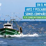 Image for the Tweet beginning: 📣Miles de animales marinos en