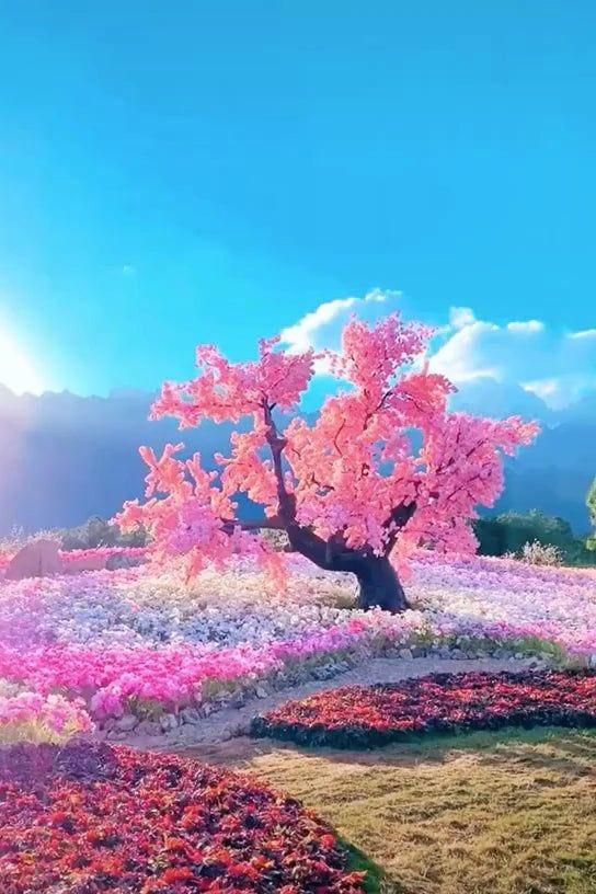 Happy Friday! #FridayMotivation #FridayVibes #Venus #TwitterWorld #HappyWeekend #LoveAndLight #WorldLove #UniversalLove #Peace #LoveNature 💎🌸🕊☺️🌎💚✨