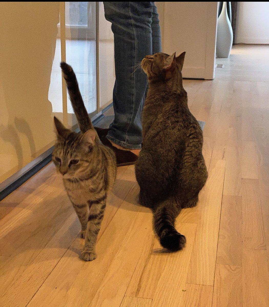 Il y a deux qui sont impatients pour leur petit déjeuner 😋🐈#fridaymorning