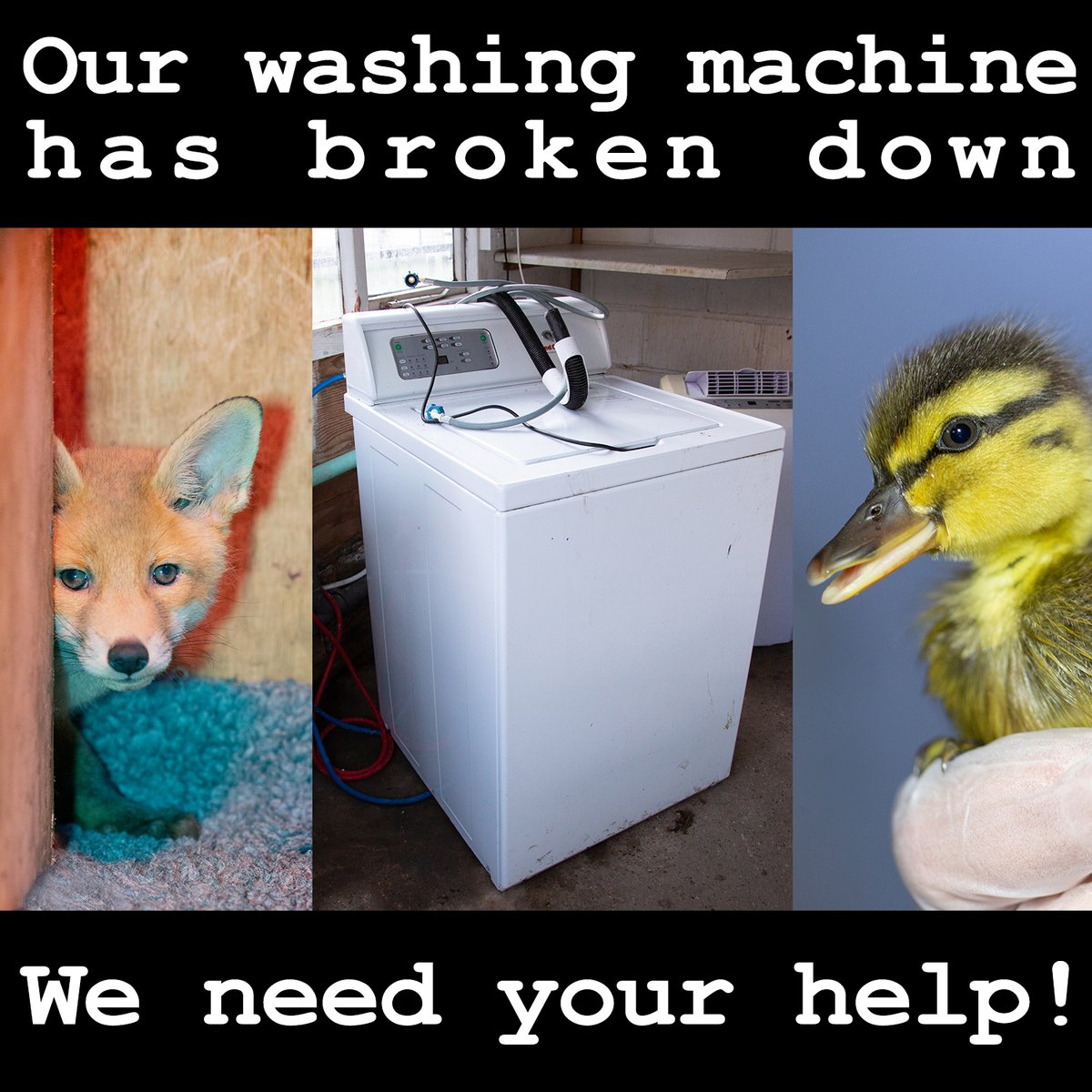 They say bad news comes in groups, and it seems BOTH of our washing machines have broken down in just a few days!  With a LOT of bedding, nests, soft toys and more needing to be kept clean, we need your help!   If you would like to support us, please visit