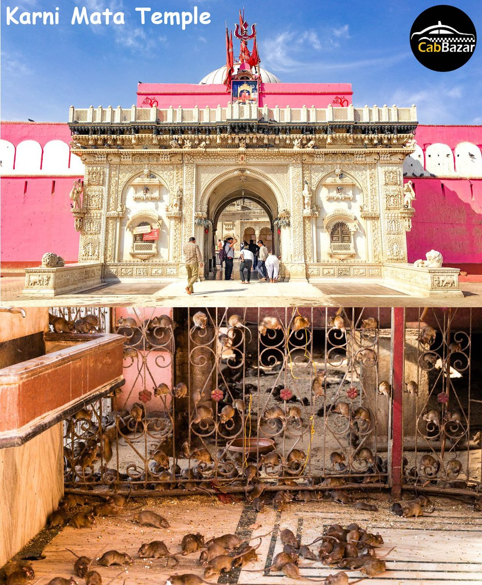 City of Camel Festival, Bikaner Like @cabbazar page to follow complete tour   #travel #fun #friends #live #family #tour #destinations #city #Trending #bikanerdiaries #bikanertrip #bikanertourism #bikanerwala #camel #camelfestival #karnimatatemple #Temple
