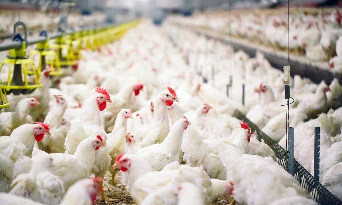 #التشيك تؤكد اكتشاف حالات #إنفلونزا_الطيور في إحدى مزارع الدواجن /العربية