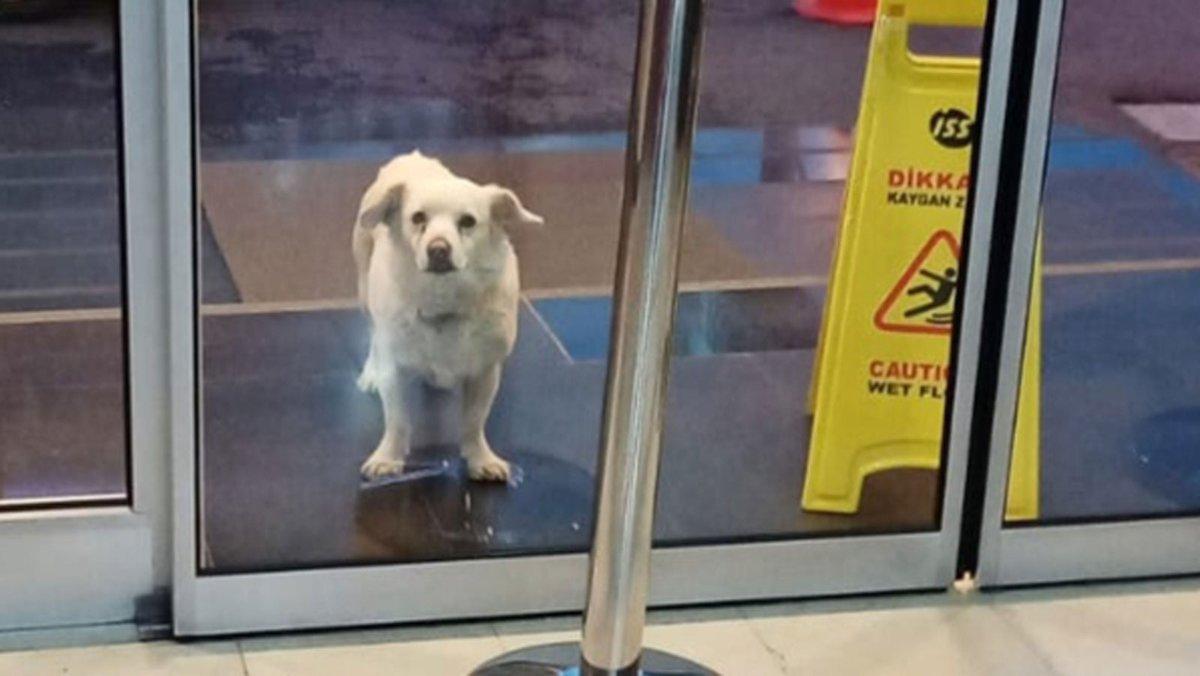 RT @7News: Loyal dog waits for six days outside hospital for her sick owner https://t.co/kfQ6JI6HZj https://t.co/c0Gw2O0tIU