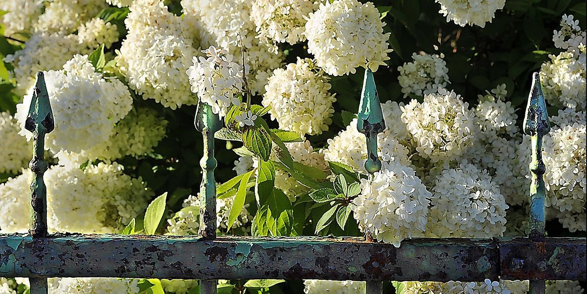 These Are the 23 Most Beautiful Flowering Shrubs to Plant in Your Garden Try these smart landscaping ideas to perk up your yard. #flowers #shrubs #plant #gardening