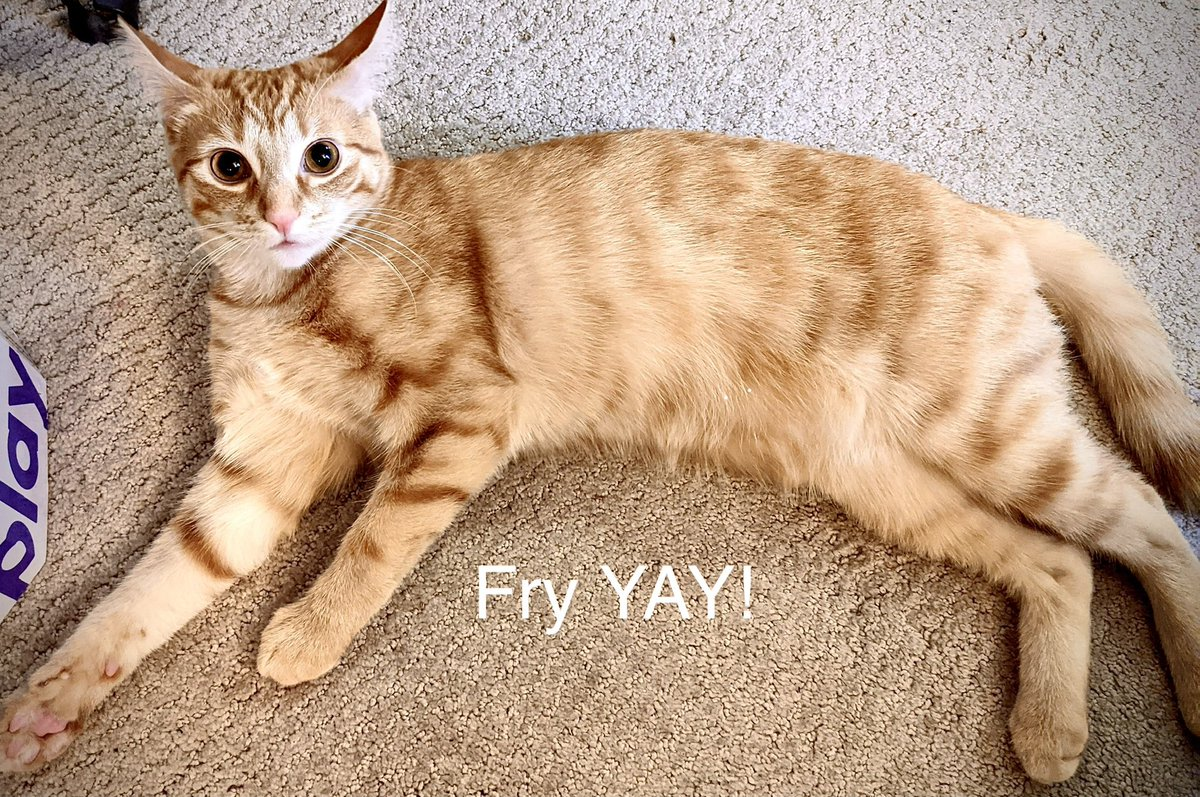 #fridaymorning #FridayFeeling #FridayMotivation #FriYAY #Cats #CatsOfTwitter #CatsOnTwitter