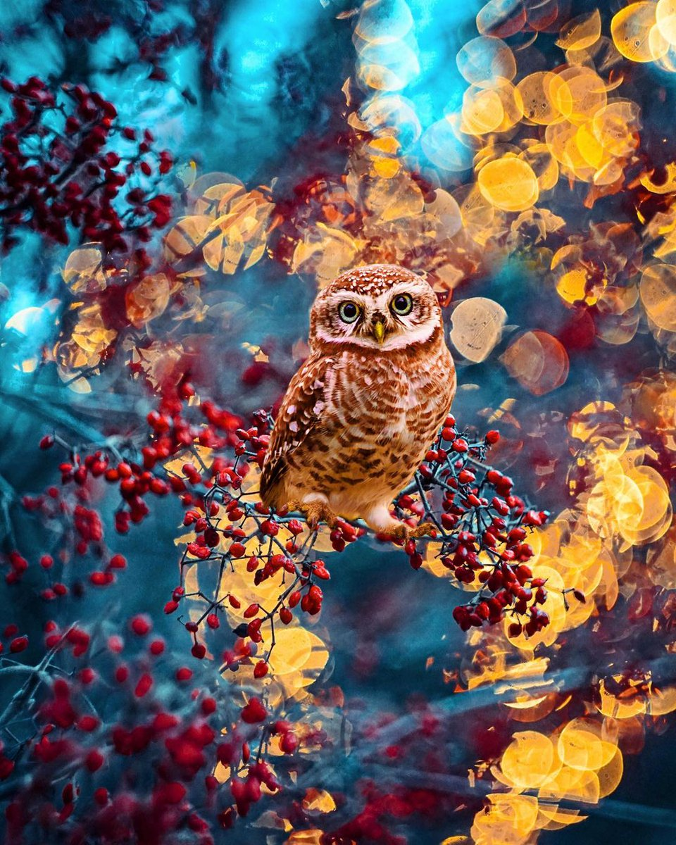 Today, this post comes to you from a collaborative effort with the talented @hardik_shelat_photography! He was kind enough to share his beautiful owl capture  #FridayThoughts #OnlineExamOrWeProtest #BiasedAzmatSaeedRejected  #nature  #Mステ #エヴァ破 sabrina #ImpeachBidenNow