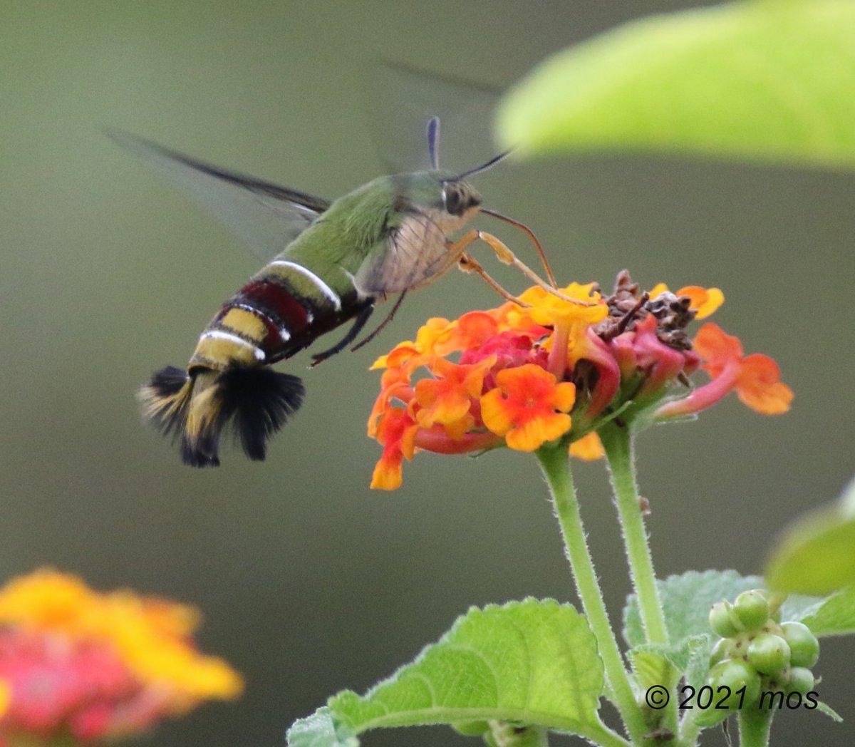 A beautiful, unidentified insect 😍 #nature #NaturePhotography #TwitterNatureCommunity #insect
