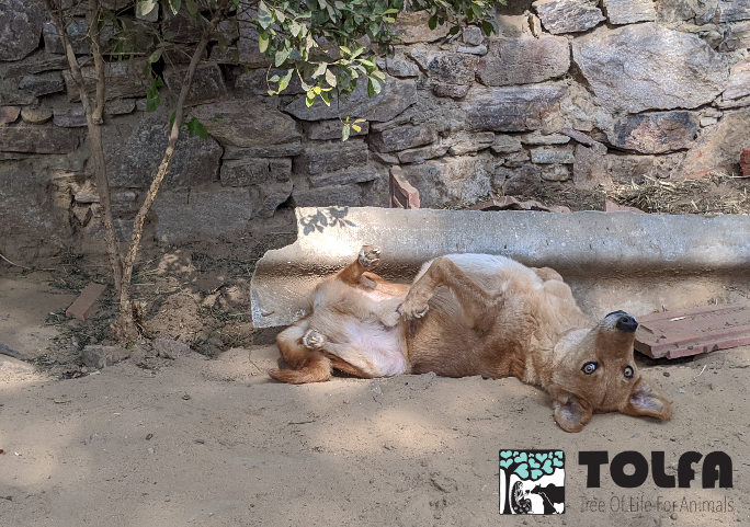 Happy Friday!  All the days are rolling into one...so here's Paul rolling you into Friyay...  Wherever you are in the world, we hope this weekend brings some peace, rest, love and light for you all.  #FriYAY #FridayFeeling #FridayVibes #FridayMotivation #weekend #dogs #TOLFA