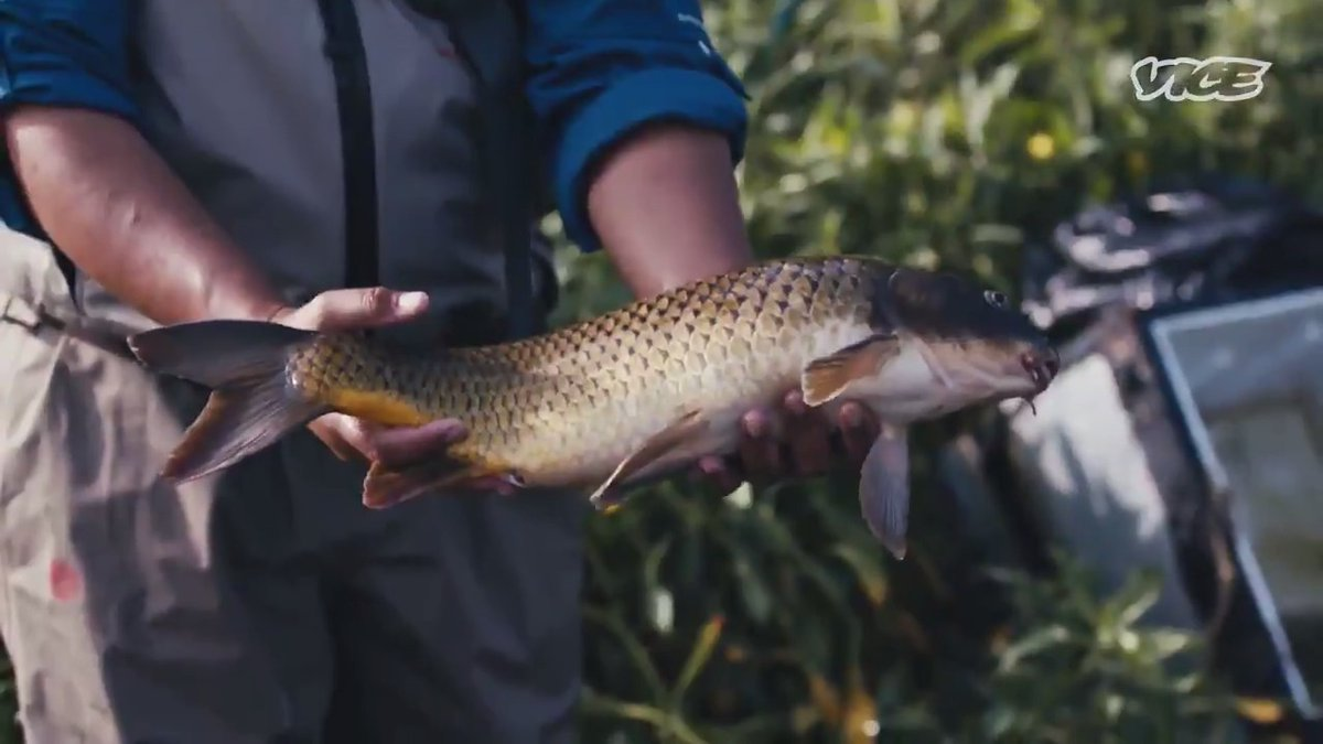 We take a trip to the LA river to meet the man catching sewer salmon.