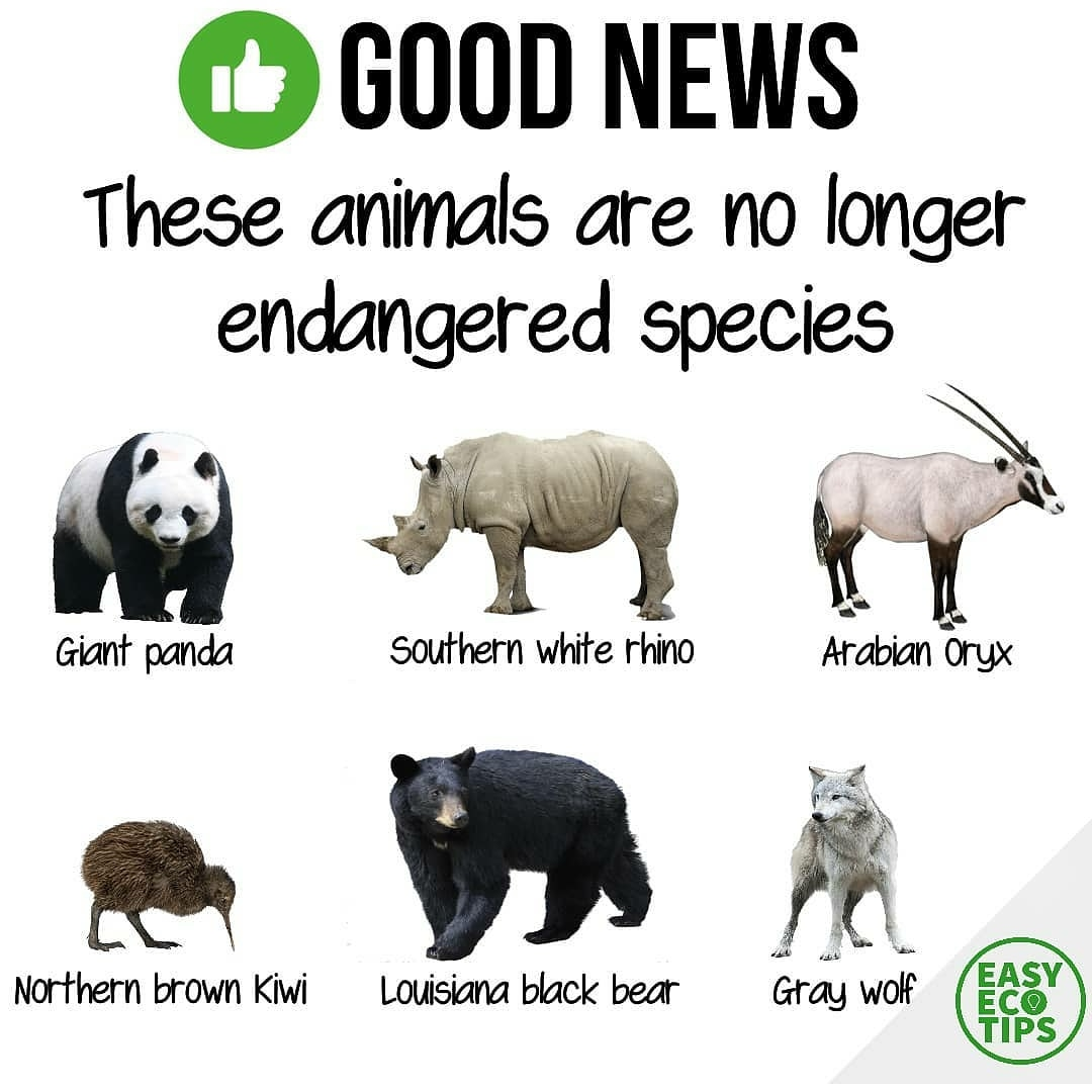 Did you know this? 🤔 These animals are no longer om the endangered species list, how wonderful! 😍 #fridaymorning #ClimateAction #animals
