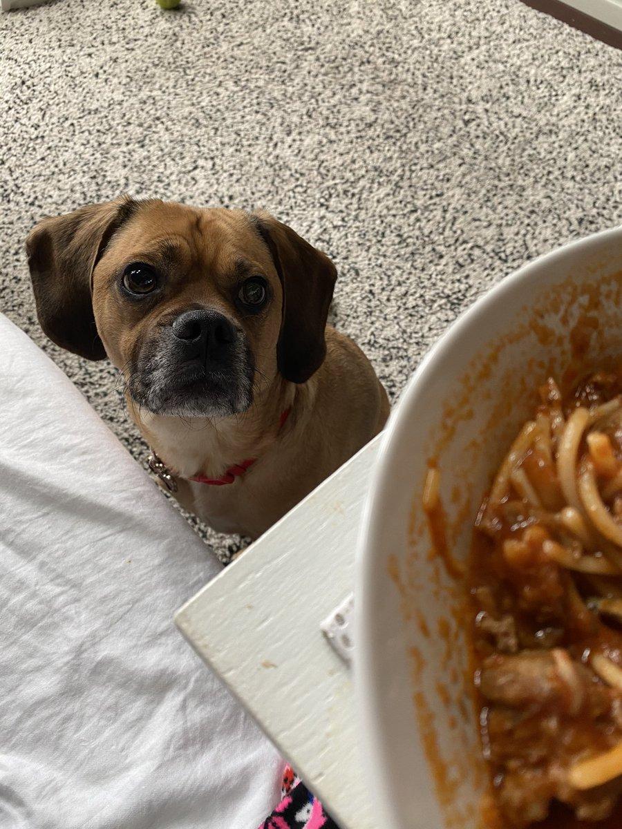 GUUD HOWWWLIN MAWRN, it'z fwyday. Mum iz eatin, Inchin me wayz closer...willz me git sum??? @ZombieSquadHQ #ZSHQ #FridayVibes #dogsoftwitter