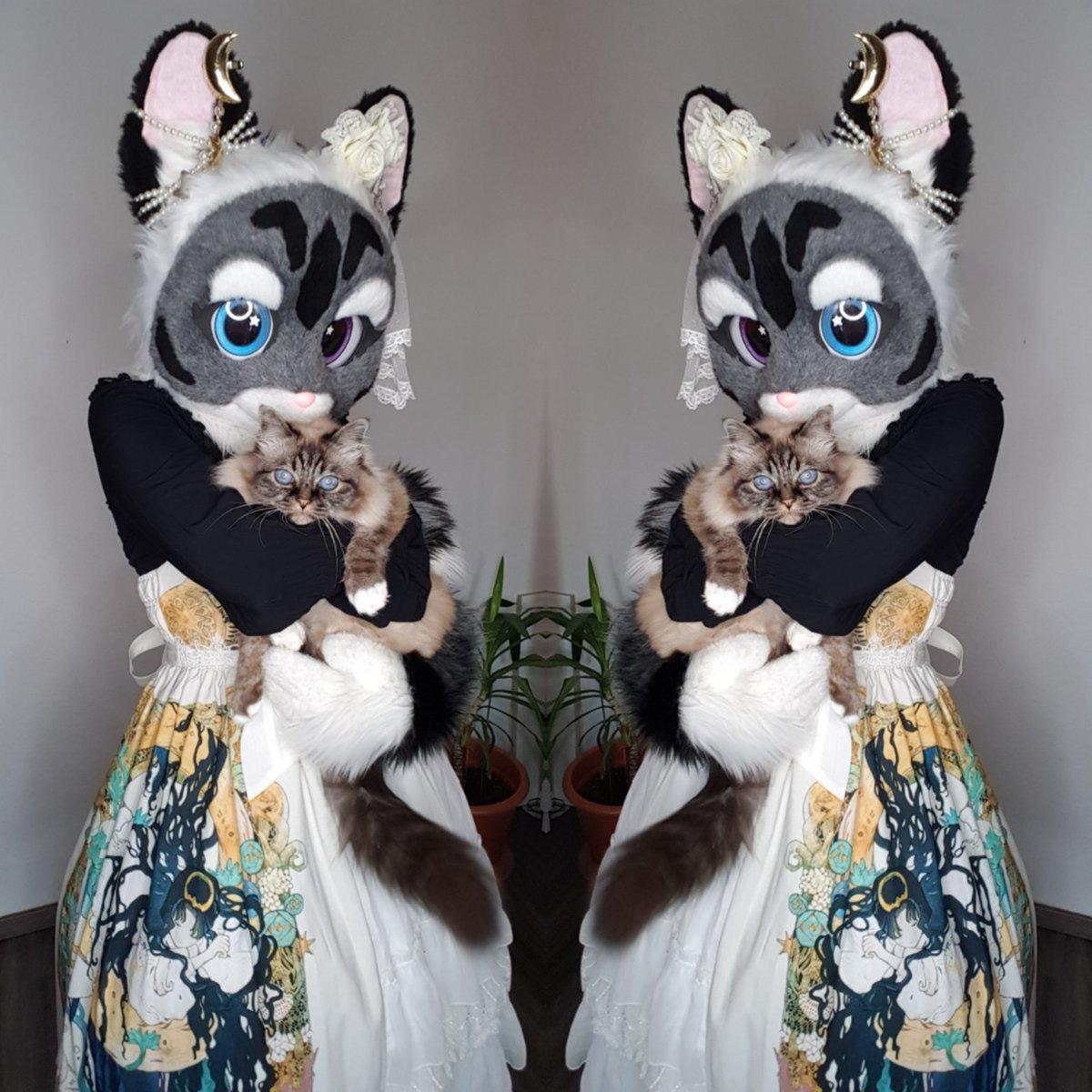 I love my cats 😋😽  Suit: @SchneeCreations  Dress: @nyanya_lolita    In my arms I hold my cat flummy. #birmacat #FursuitFriday #fursuit #lolita #lolitafashion #furry #furrygirl #kawaiineko