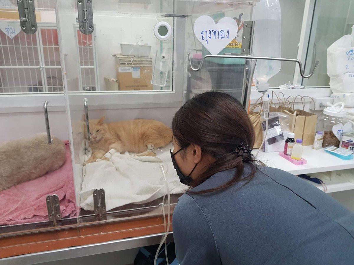 ช่วยกันค่ะ  #ทาสแมว #รักแมว #CuteCats #cat #แมว #ทวิตดีคนรีน้อย #ร่วมด้วยช่วยกัน