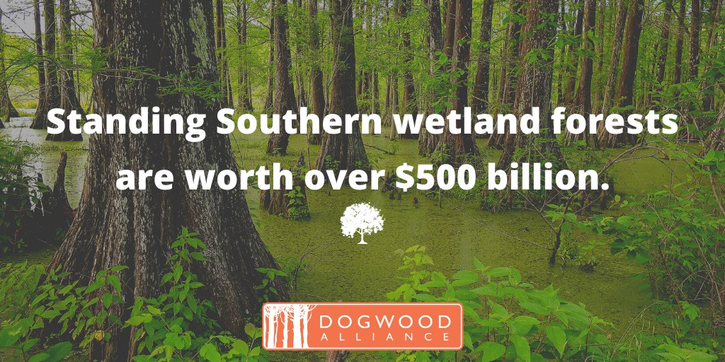 FACT FRIDAY: Standing Southern wetland forests are worth over $500 billion. Get ready to celebrate wetlands - #WorldWetlandsDay is coming up on February 2nd!  #Friday #FridayThoughts #wetlands