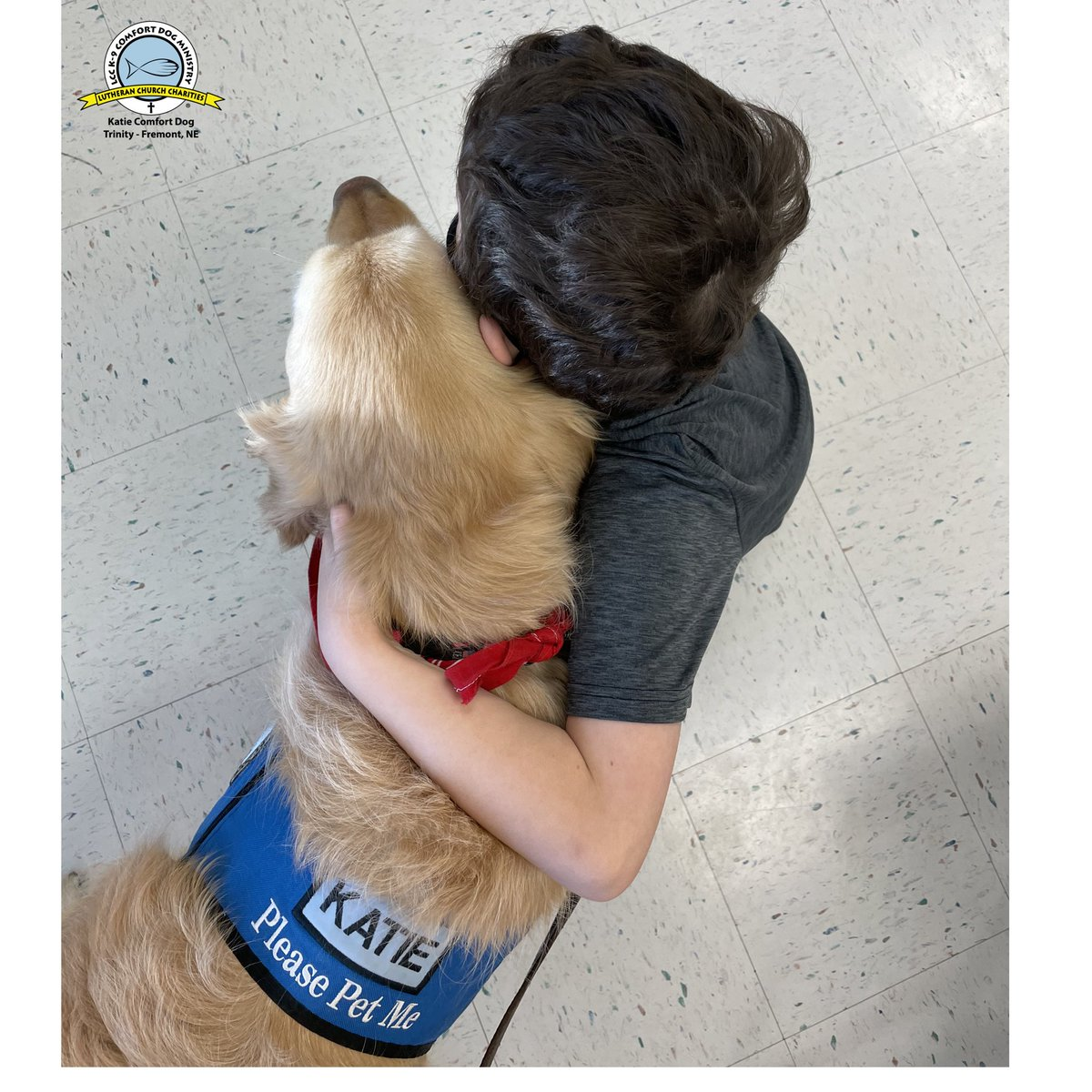 @K9ComfortDogs It's Friday my wonderful friends!! Let the stress of the week go & ENJOY the weekend!   Hugs and love ❤️🐾❤️  #fridayfeeling #goldenretriever #comfortdogs #comfortlife #goldenlove #loveinaction #FridayVibes #hugs