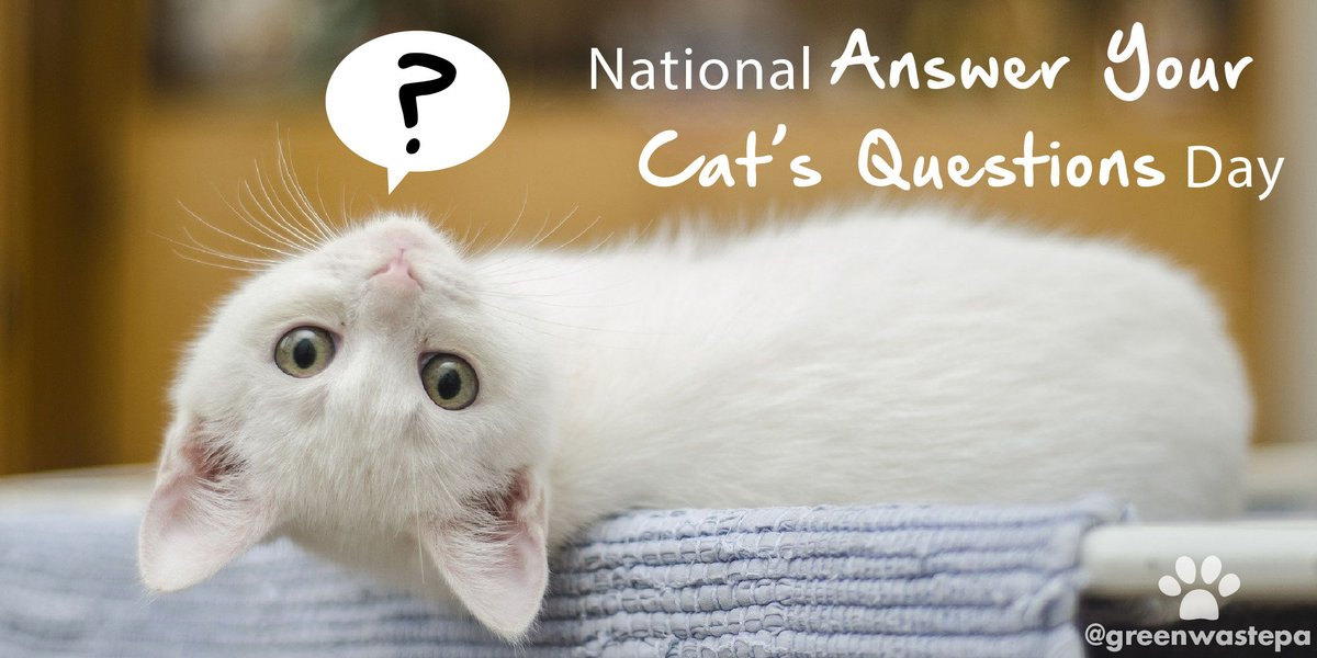 "Today is National #AnswerYourCatsQuestionsDay. This kitty asked ""Where does used kitty litter go: garbage, compost, or recycle?"" Can you answer this cat's question? Leave your answer in the comments! #answeryourcatsquestions #nationalansweryourcatsquestionsday #cat"