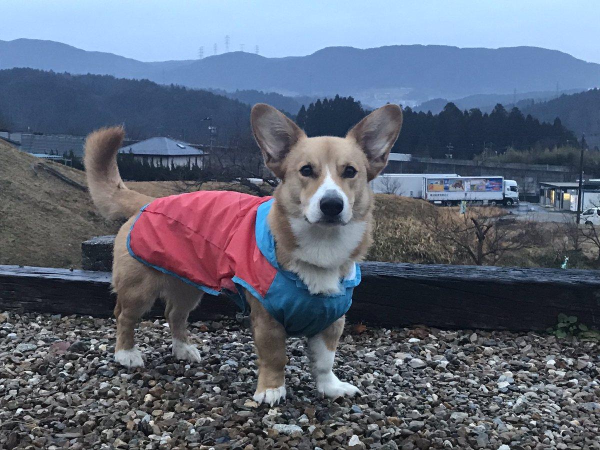 おはようございます!小雨降る恵那です☂️気温は4℃と冷え込みは全くなし😅今朝は町内をグルグルっと散歩🐾関東甲信越の皆さん、大雪にお気をつけて👍今日もよろしくお願いします😊 https://t.co/gkwMQrsC7A