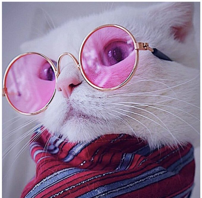 Hope you're all having a great Friday so far! 😘 Here is a cat wearing sunglasses for absolutely no reason