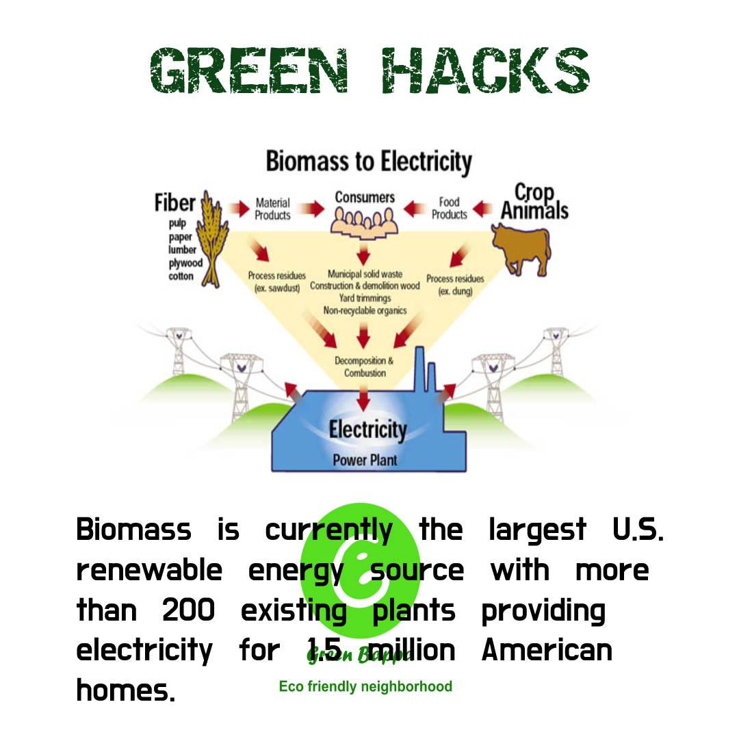 Biomass is currently the largest U.S. renewable energy source with more tham 200 existing plants providing electiricty for 15 million American homes.  #GreenIndiaChallenge #GreenWall #GreenNewDeal #greentwitter #greenenergy