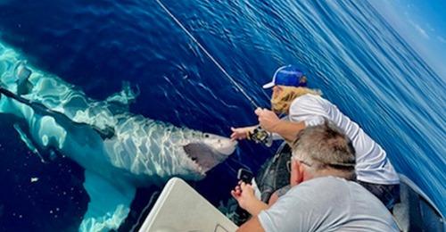 Boat captain pets great white shark off the Suncoast: https://t.co/HrHlC367ec https://t.co/80RBQFTgsE