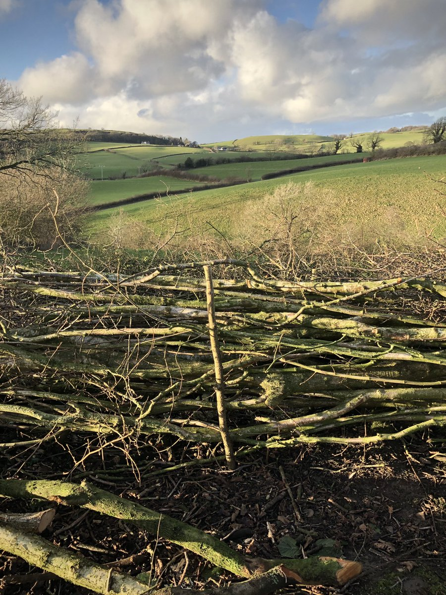 Thorn, nut and blackthorn hedge we laid today.