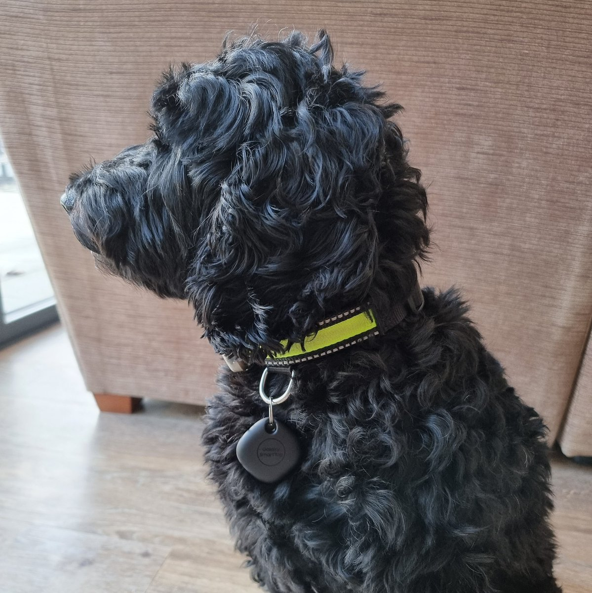 Have deployed the @SamsungMobile #GalaxySmartTag on Beano dog. Intrigued to see if the tracker is picked up by the @SmartThings 'mesh network' of existing Galaxy devices. #PetTech