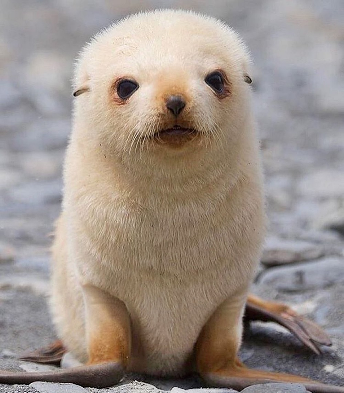 #FurryFriday:  #Babies #Baby #Animal #Animals #SeaLion #Pup #SeaLionPup