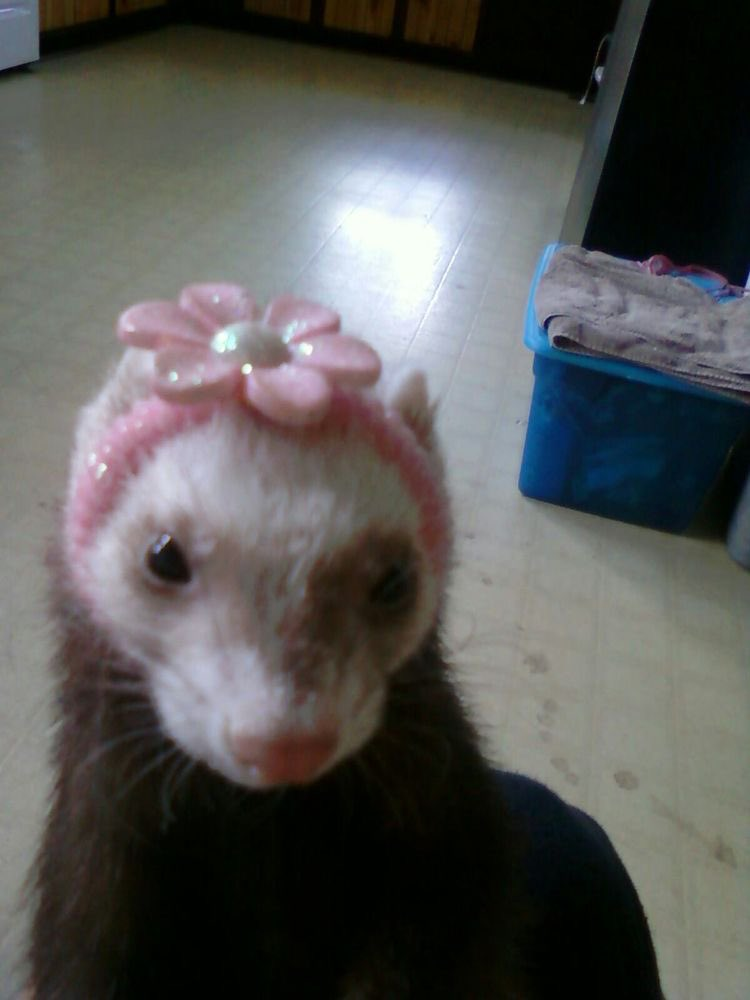 #AskSinjin which ferret are you??