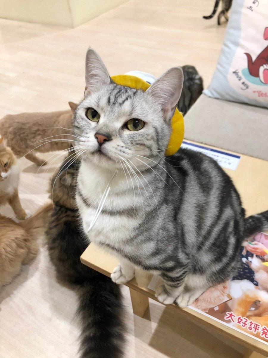 カフェ 猫 静岡 パルコ