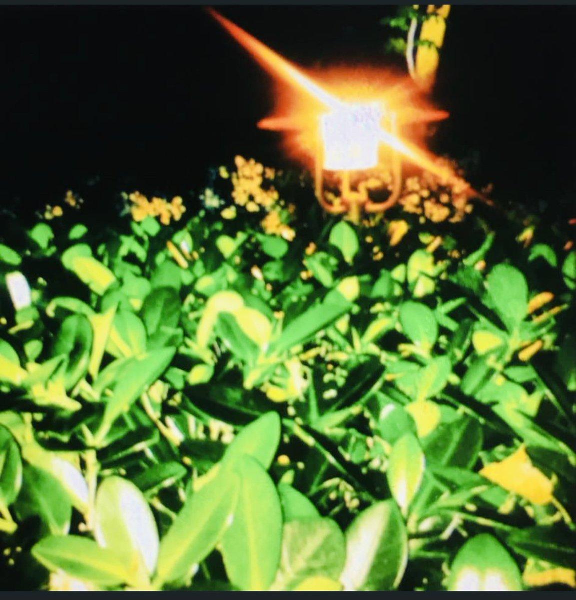 """#BoaNoite/#FelizAmanhã  """"Não digas onde acaba o dia. Onde começa a noite. Não fales palavras vãs. As palavras do mundo."""" (Cecília Meireles) #noite #night #diafeliz #happyday #luz #light #gratidão #gratitude #jardim #garden #saudade #missing  #goodnight #happytomorrow #foto #photo"""