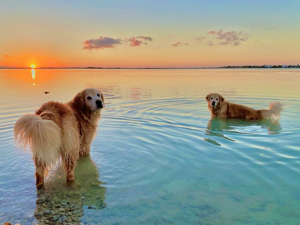 Replying to @TheGoldenRatio4: Sunset sister swim