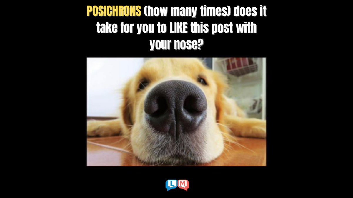 How many times does it take for you to LIKE this post with your nose? 😜😆😁 Grab your copy of Ignatius Shoestring's NEW book at ! #dog #like #love #nose #words #fun #participate #silly #wordnerd #fridayfeeling