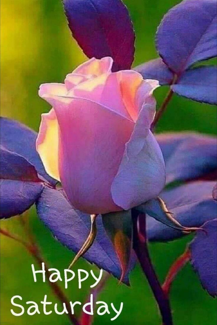 @Takerubaby_1989 #HappySaturday ขอให้สุขทั้งวันครับ