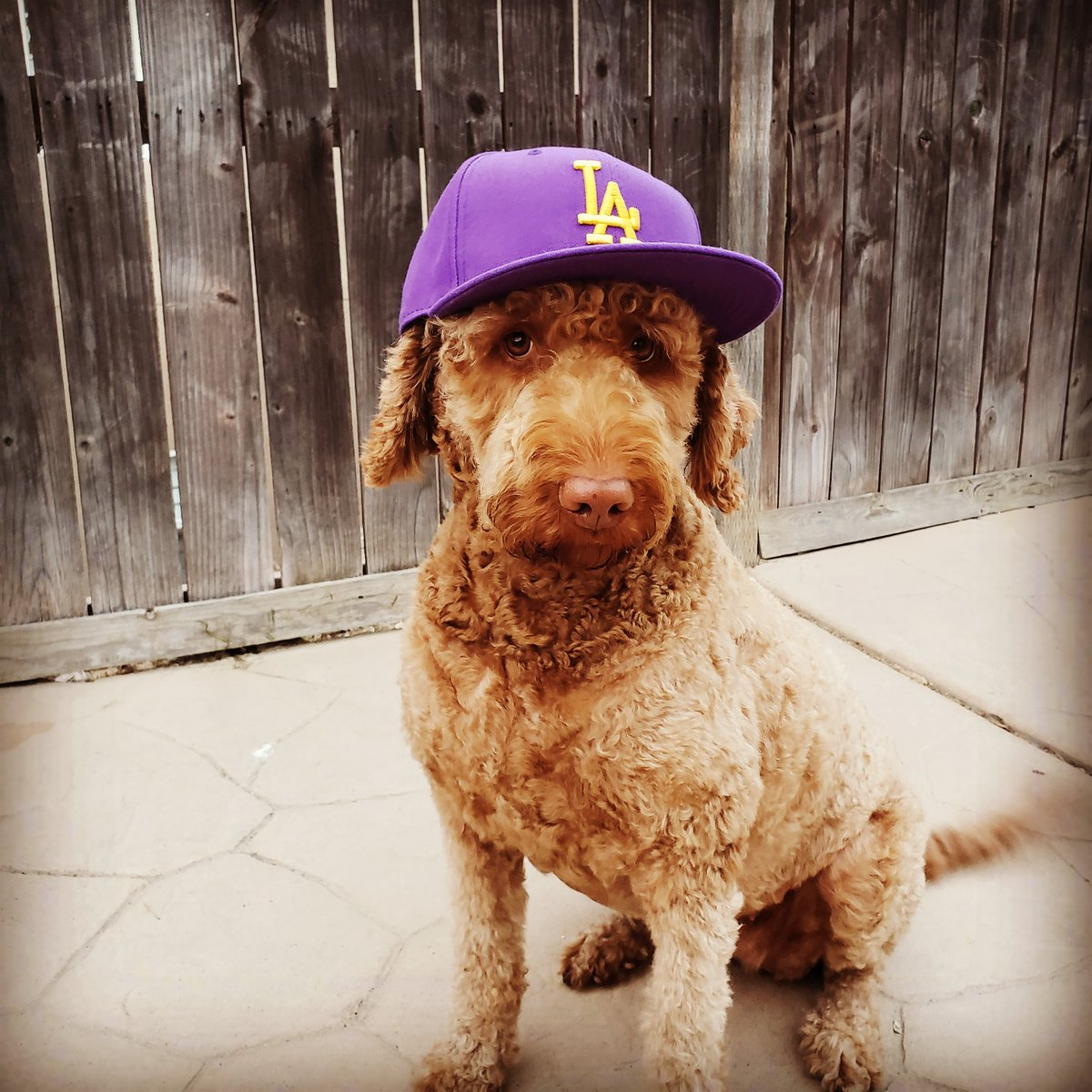 @Lakers @JeanieBuss Our girl Charlotte, repping the Purple N Gold. #LakersFamily #LAKERS4LIFE