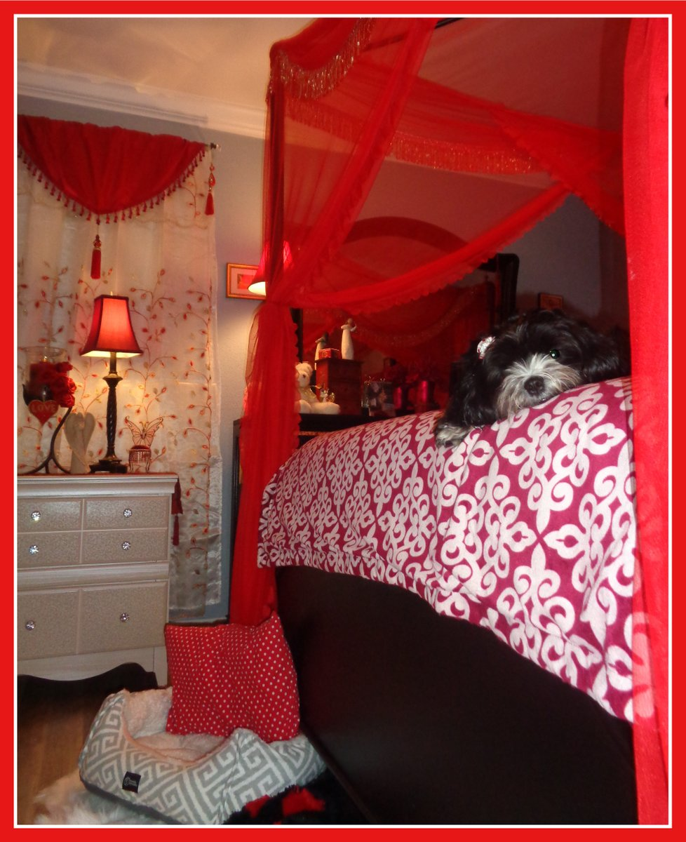 Peek A Boo My Precious Oreo Sees You! ❤🐾 Isn't She Just Too Cute! ❤🐾 I Just Love Her So Much! ❤ She Is Comfy Cozy In My Bed & Peeking Out Her Little Head! ❤ She Loves My Pretty Blankets & Decorations & I Even Have Her Doggie Bed At The Foot Of My Pretty Canopy Bed! ❤ 🐾 😊