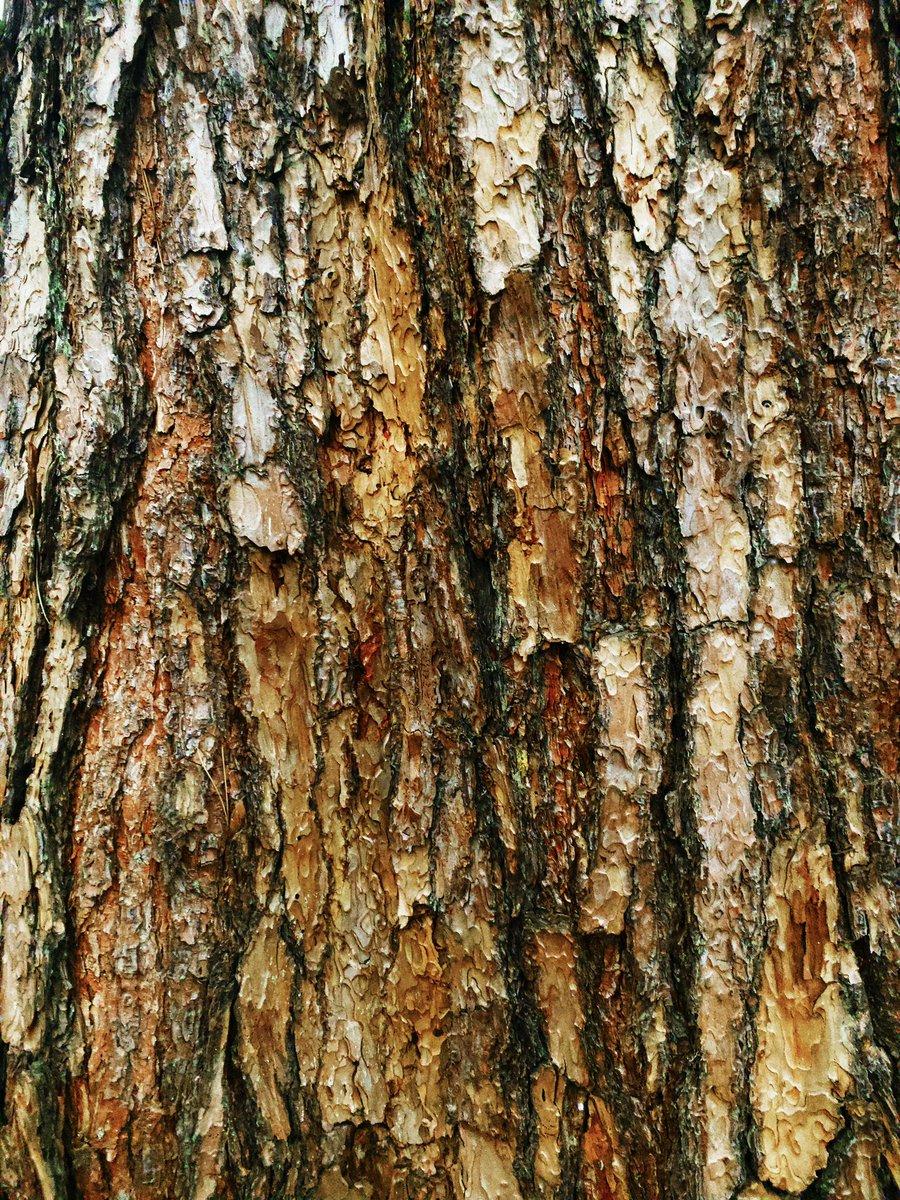 【樹皮蒐集】無題 #樹皮蒐集 #樹を撮る人 #樹皮 #写真好きな人と繋がりたい #キリトリセカイ #nature #photography #naturephotography