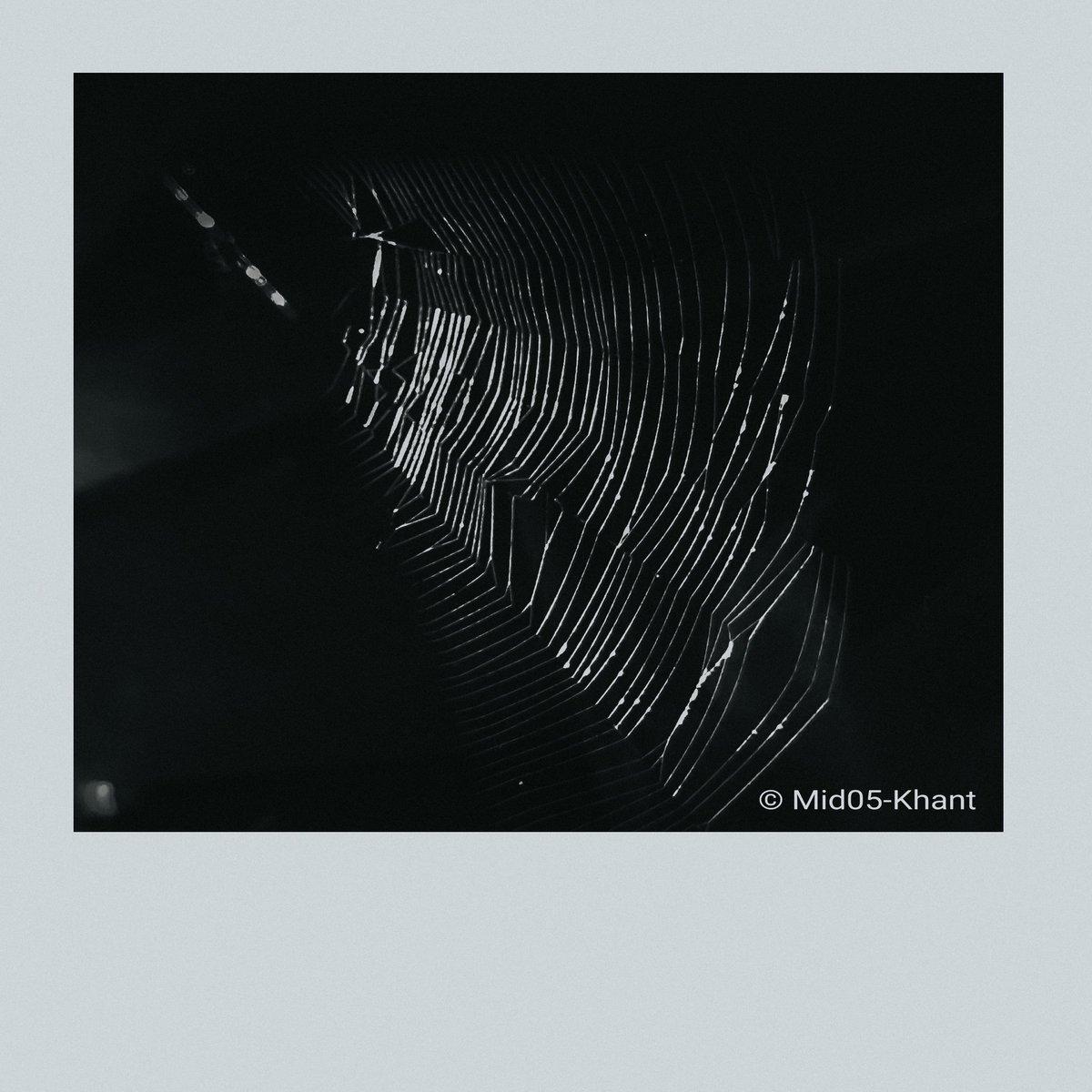 Snare  #spider #blackandwhite  #photography  #mobilephotograph #photographmyanmar