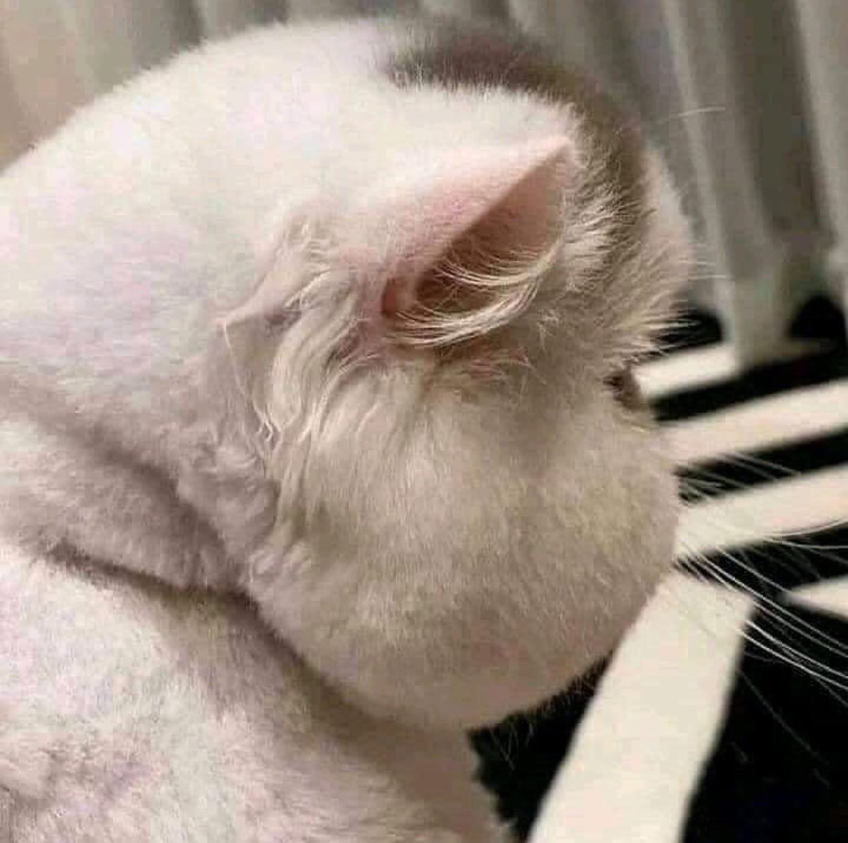 Replying to @M0NEULI: this is hyungwon                    this is cat