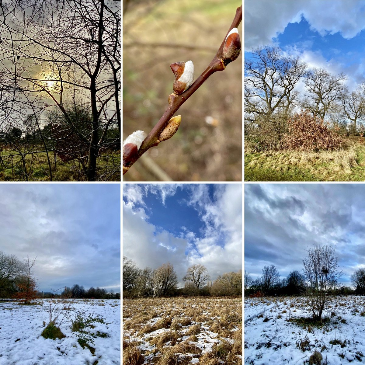 my #sixonsaturday #nature photos are from #urban wild land ( @ryebankfields ) in #manchester 100m from home. v mixed #weather this week ❄️☀️  #NaturePhotography #outdoors #beauty #TwitterNatureCommunity #saveryebankfields #wellbeing #wildlockdown #lockdown2021 #selfcare #StaySafe