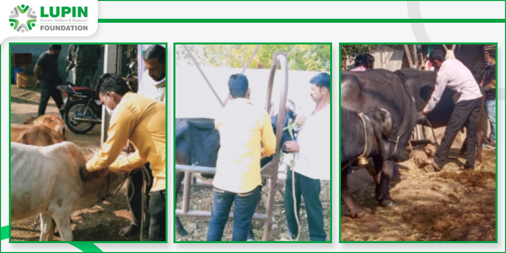 #LupinFoundation Dhule organized #AnimalHealth Check-up and #Vaccination Camp in coordination with #Government #VeterinaryDoctors.  #LupinCares #AnimalLovers #AnimalRights #AnimalsLife #SupportAnimals #AnimalCare #AnimalVaccination