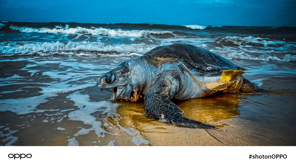 They have a tough hide a tender heart. A sea turtle was #shotonOPPO by #OPPOF15. #OPPOSriLanka