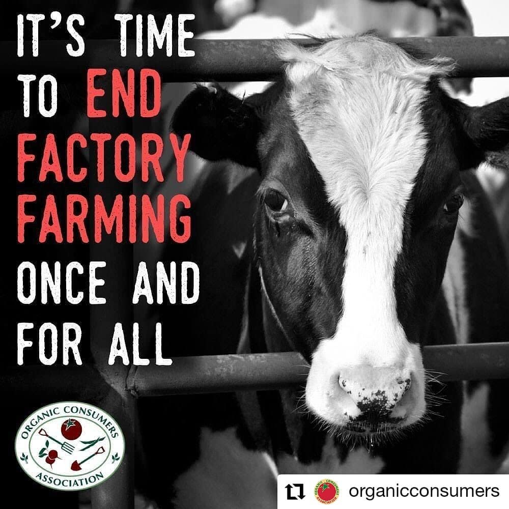 Rooting for a ban on factory farming. We need farms safe and open. #banfactoryfarms #farmsnotfactories #sustainableLiving #livestockfarming #smackdown #endfactoryfarming #saynotofactoryfarming