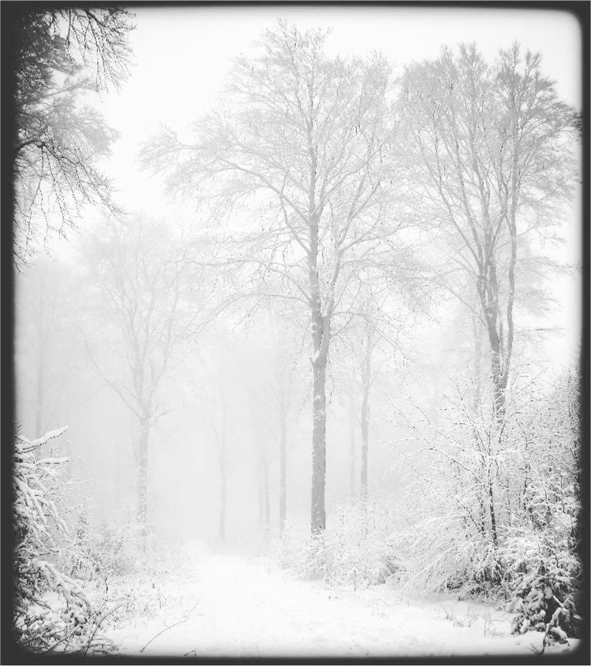 ... hazy symphony ... #winter #snow #frost #mist #fog #monochrome #blackandwhite #mood #atmosphere #dream #beauty #peace #silence #magic #spell #imagination #fairytale
