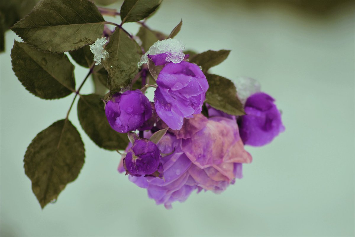 | İnsan, anladığı ve anlaşıldığı insanda çiçek açar. 🌺  #photooftheday #photograghy #Flowers #cumartesi