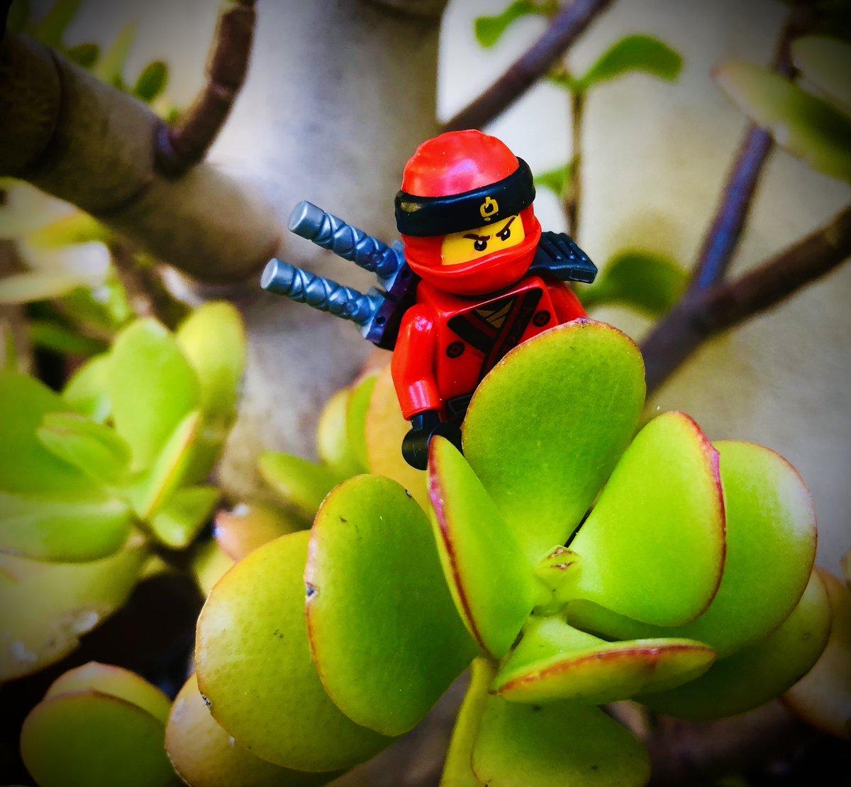 Spy game  #CloseUp #minifigure #Minifigure #LEGO #movie #movies #moviesanywhere #Ninjago #toys #toyphotography #toycollector #toy #Photoshoot #Photos #PhotoOfTheDay #PhotoMode #photographylovers #PhotographyIsLife #PhotographyIsArt #Photography #Photogrammetry #photobook
