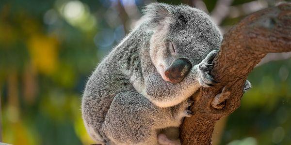 ANIMAL PETITION - Please Sign & Share - This Logging Company Is Decimating Whats Left of Australian Wildlife Habitats After the Devastating Bushfires https://t.co/OXATwByciv - #Vegan #GoVegan #Veganism #VeganLife #Petition #AnimalPetition https://t.co/bh55wG0ByU