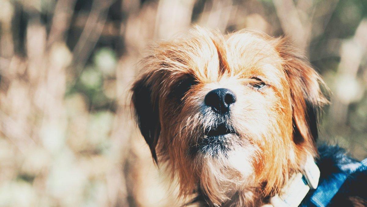 Relax it is Saturday, good vibes only 😘❤️  #dogsofinstagram #dog #instadog #dogstagram #dogs #puppy #dogoftheday #pet #cute #petstagram #ilovemydog #love #lovedogs #doglife #puppies #instagramdogs #pets #puppylove #animal #instagood #dogsofig #dogs_of_instagram https://t.co/FEtYhEMY4D