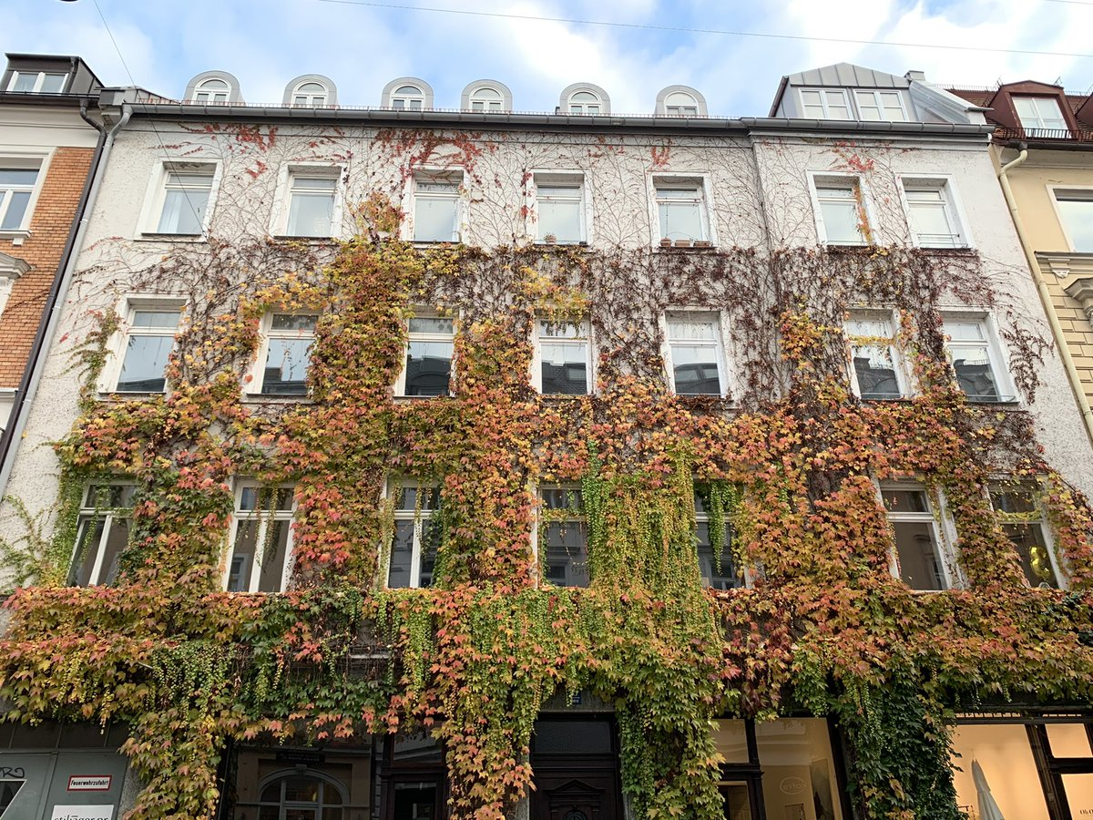 Just love this kind of Ivy leaves wall ❤️ #autumn #beauty